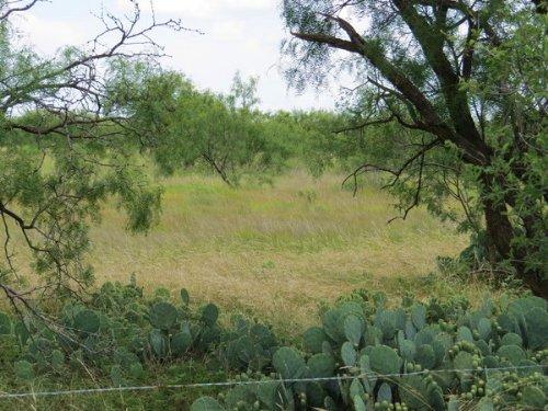 Mustang 22 W/ Electricity : Eden : Concho County : Texas