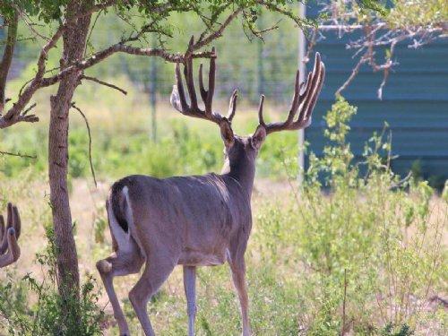 Rancho 32 : Rocksprings : Edwards County : Texas