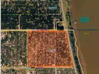 14 Acre Valencia Grove  Frostproof