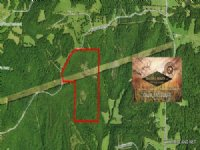 88.00 Acres Hunting Land, Timber