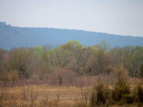 5.01 Acre Daisy Meadows,electricity : Daisy : Pittsburg County : Oklahoma