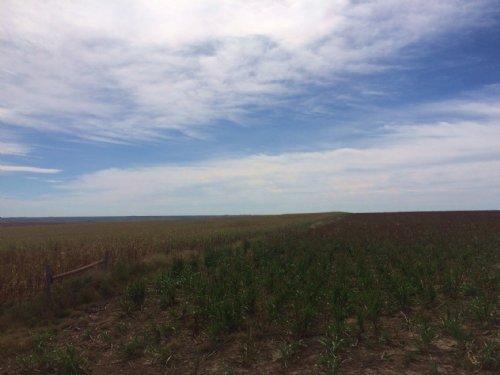Rawlins County Farm & Hunt : Atwood : Rawlins County : Kansas