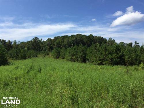 The Holcombe Road Koenton Tract : Koenton : Washington County : Alabama