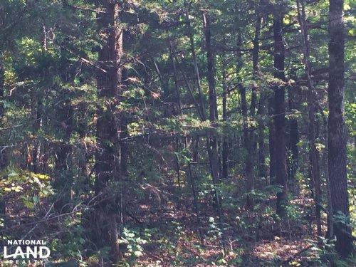 80 Acres Timberland Near Lake Norfo : Jordan : Baxter County : Arkansas