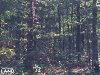 80 Acres Timberland Near Lake Norfo