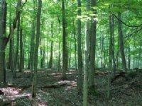 190 Acres Timberland Near Watertown