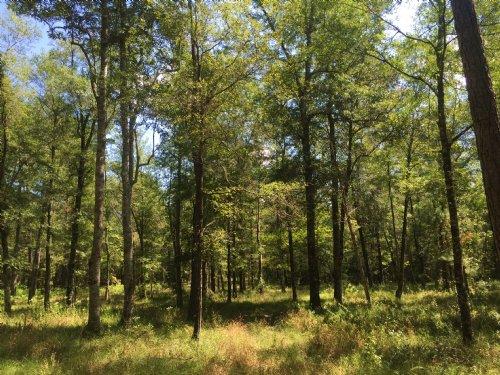 Kings Way Tract : Citronelle : Washington County : Alabama