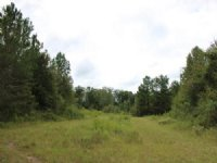 Great Hunting For $999 / Acre