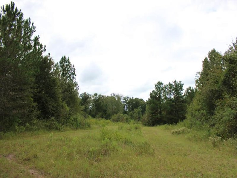 Great Hunting For $999 / Acre : Abbeville : Wilcox County : Georgia