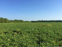 346± Recreation / Investment Tract