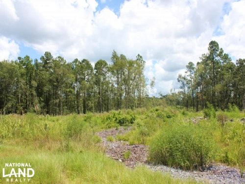 Homesite Or Mini Farm Tract : Andrews : Georgetown County : South Carolina