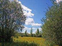 51 Acres Farmland Near Clarence