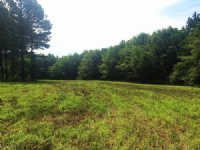 61 Ac For A Great Hunting Retreat : Banks : Pike County : Alabama