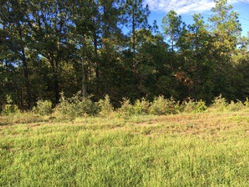 Elam Tract : Millen : Jenkins County : Georgia