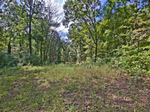 34 Acres; Quail Run Rd : Elsberry : Lincoln County : Missouri