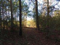 42.49 Acres Near Hattiesburg : Hattiesburg : Forrest County : Mississippi