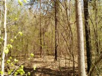 Mathis Road - 21.17 Acres : Haddock : Jones County : Georgia