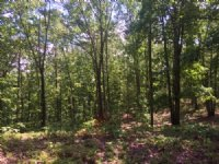 19.97 +/- Wooded Acres, Dallas