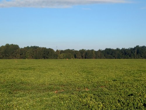 Beautiful 400 Ac Farm/hunting Tract : Leesburg : Lee County : Georgia
