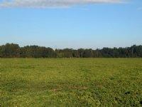 Beautiful 400 Ac Farm/hunting Tract : Leesburg : Lee County : Georgia