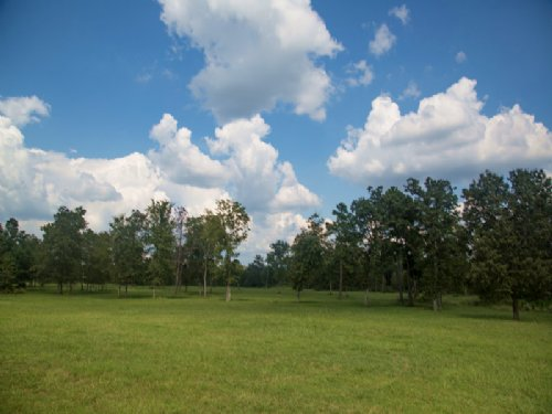 140 Acres Flynt Road : Huntsville : Walker County : Texas