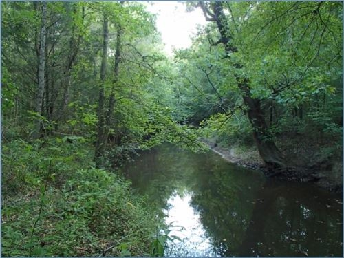 45 Acres In Oktibbeha County : Starkville : Oktibbeha County : Mississippi