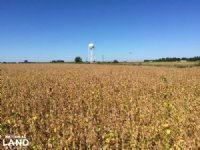 80+/- Acre Rice & Duck Hunting Farm