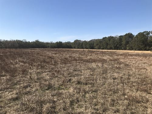 110 Acres In Lamar, Sc : Lamar : Darlington County : South Carolina