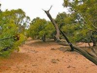 Recreational Land Near Reservoir