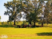 Hamilton Cattle Farm : Hamilton : Marion County : Alabama