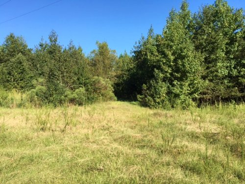20± Acres : New Augusta : Perry County : Mississippi