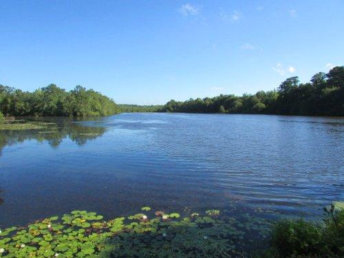 Veney's Mill Pond : Dawson : Terrell County : Georgia