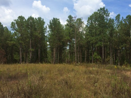 Prime Hunting And Timber Investment : Eatonton : Putnam County : Georgia