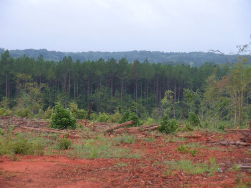 Ninety Six Creek : Ninety Six : Greenwood County : South Carolina