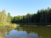 43 Acres Bordering State Forests