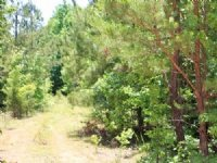6.1 Acre Hickory Hill Ranch