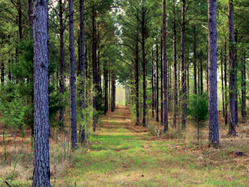 280 acres : Aberdeen : Monroe County : Mississippi