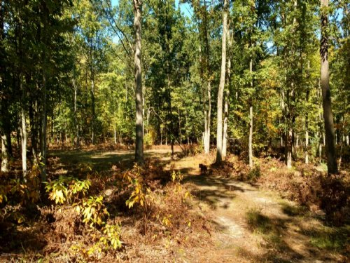 Beautiful Piece Of Hunting Land : Custer : Mason County : Michigan