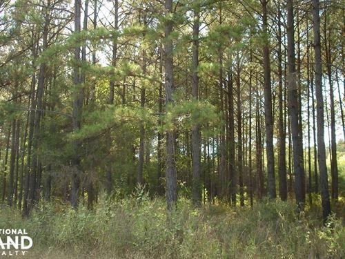 Turkey Ridge : Emelle : Sumter County : Alabama