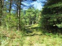 24 Acres Adirondack Park Build Site