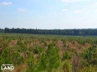 240 Acres Pine Plantation Timber : Hope : Hempstead County : Arkansas