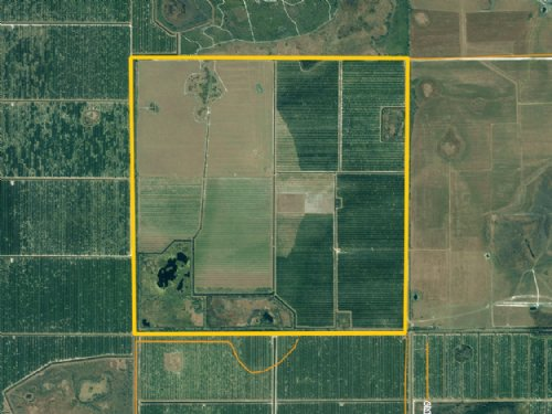 640± Acre Turn-key Grove : Zolfo Springs : DeSoto County : Florida