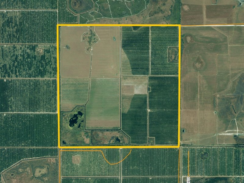 640 177 Acre Turn Key Grove Farm For Sale Zolfo Springs