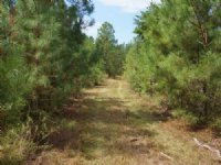 Josey Tract : Red Level : Covington County : Alabama