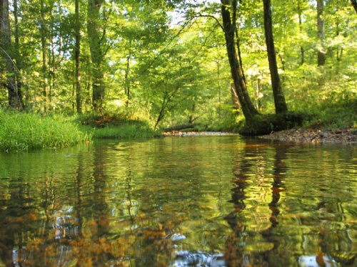583 Ac Long Chief Creek Frontage : Summertown : Lawrence County : Tennessee