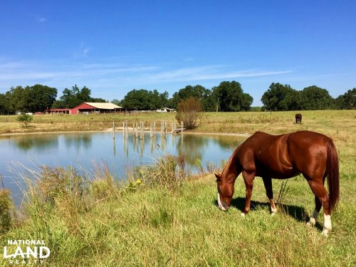Rolling Acres Ranch And Horse Farm : Bay Minette : Baldwin County : Alabama