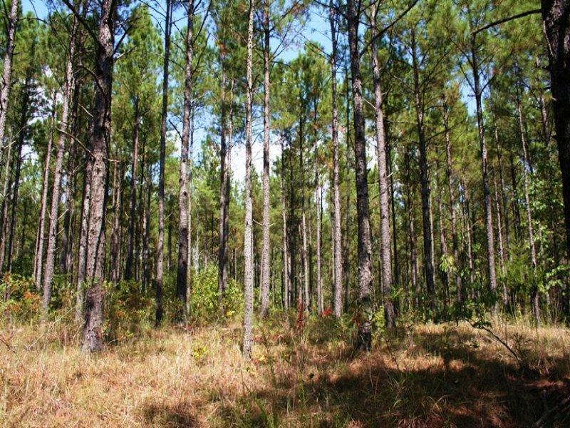 Millstone Creek Tract : Palmetto : Oglethorpe County : Georgia