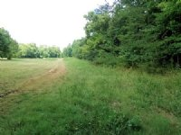 9.9 Acres - Wooded, Unrestricted