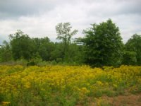 7 Acres, Owner Terms, Unrestricted