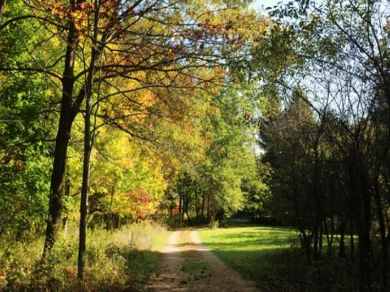 96 Ac Beautiful Mature Hardwoods : Dodgeville : Iowa County : Wisconsin